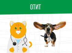 Отит уха: какая категория годности?