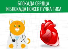 Блокада сердца: какая категория годности?