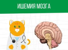 Ишемия мозга: как определяется категория годности?