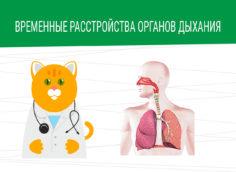 Временные расстройства органов дыхания и армия